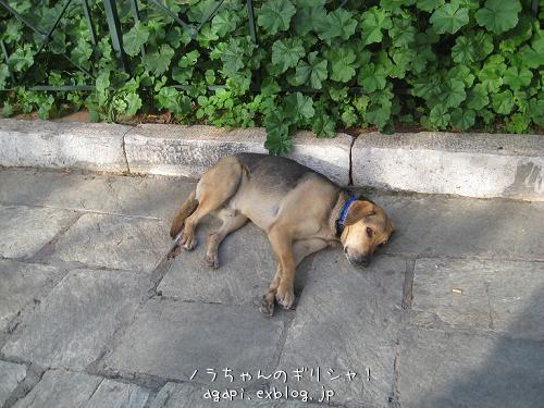 猫と昼寝をしようと思っていた野良犬君_f0037264_9153491.jpg