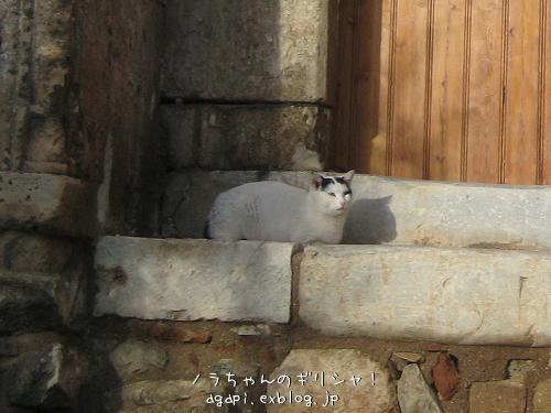 猫と昼寝をしようと思っていた野良犬君_f0037264_9203539.jpg