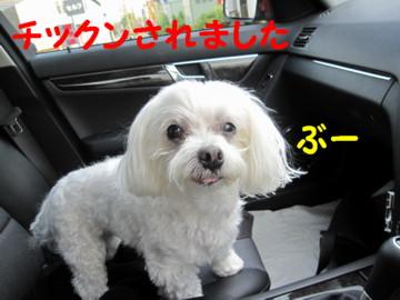 f0145192_19545660.jpg