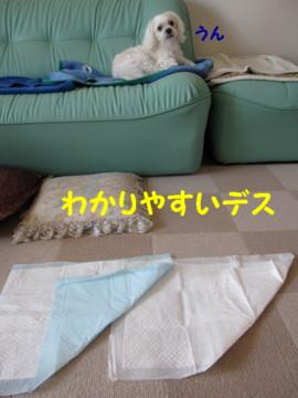 f0145192_2024343.jpg