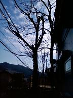 c0196495_1574677.jpg