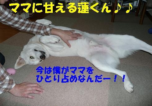 f0121712_174742.jpg