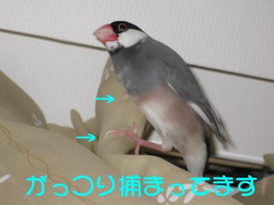 b0158061_2028183.jpg