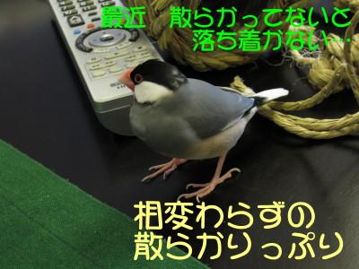 b0158061_2029752.jpg