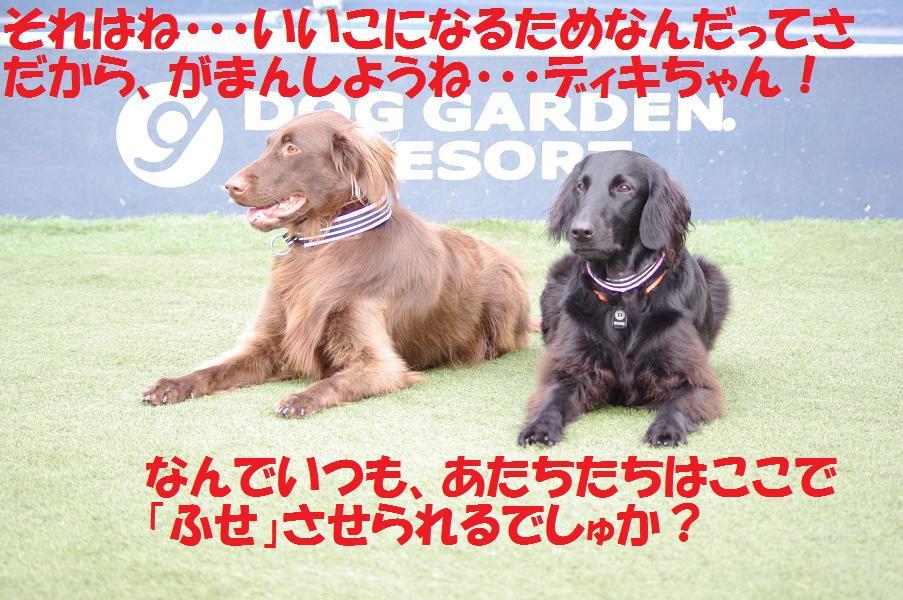a0104464_13474485.jpg