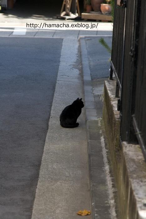 Cats in Motomachi Town #1_c0158775_21305145.jpg