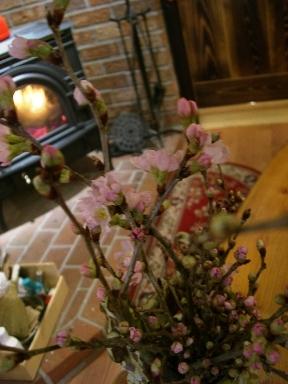桜じゃないです。_a0045293_13583535.jpg