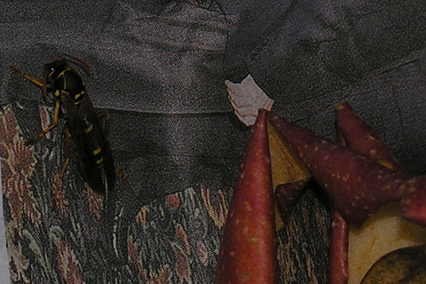 足長蜂の冬眠_c0121993_18532057.jpg