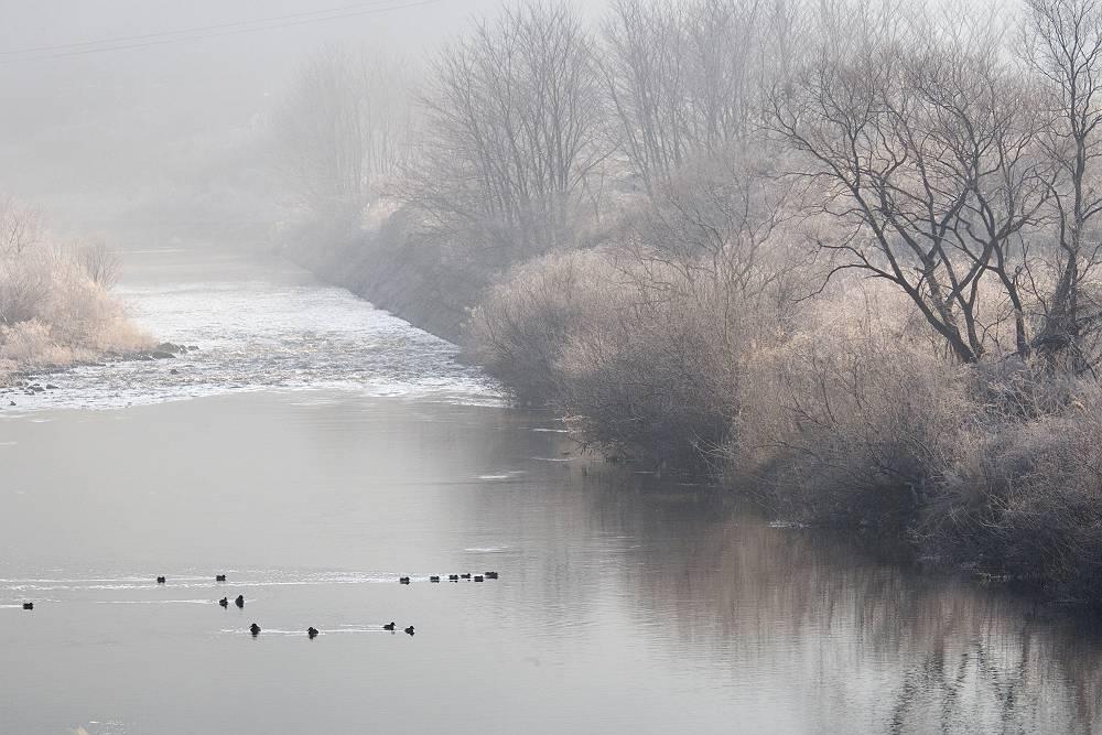 水鳥のいる風景_b0074098_19434774.jpg