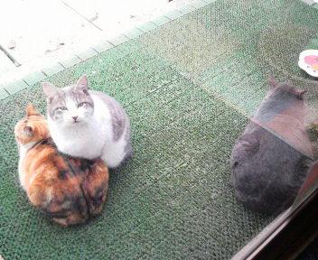 エサ待ちの猫_c0140599_1231592.jpg