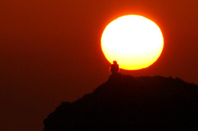 夕陽に猛禽のシルエット_d0074828_2256169.jpg
