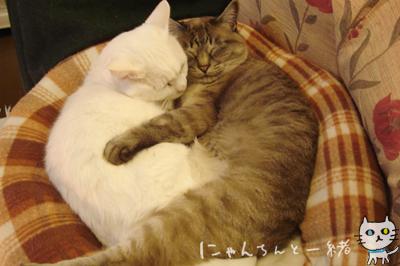 ぼく、愛情を込めて抱きます♡_e0031853_23202631.jpg