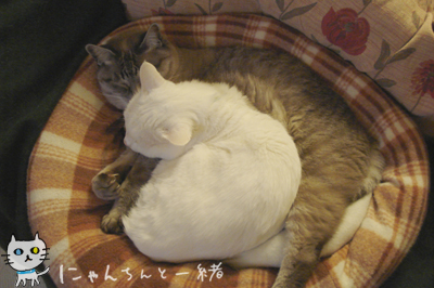 猫族の気遣い_e0031853_23542833.jpg