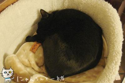 猫族の気遣い_e0031853_23544744.jpg