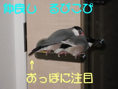 b0158061_2204035.jpg