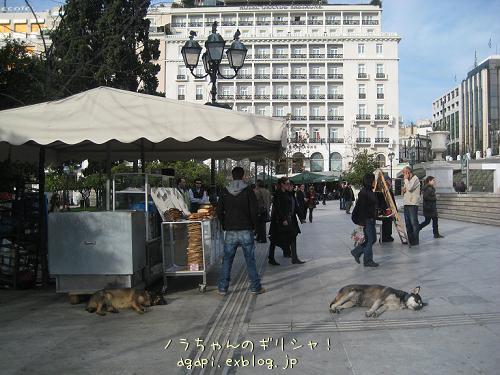 シンダグマ広場のいつもの昼寝犬_f0037264_649475.jpg