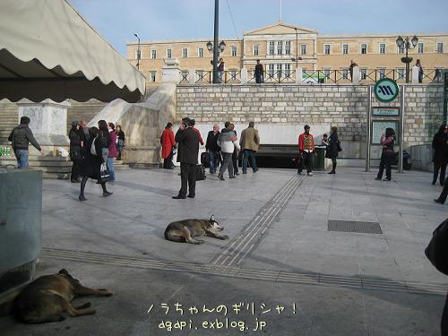 シンダグマ広場のいつもの昼寝犬_f0037264_6544778.jpg