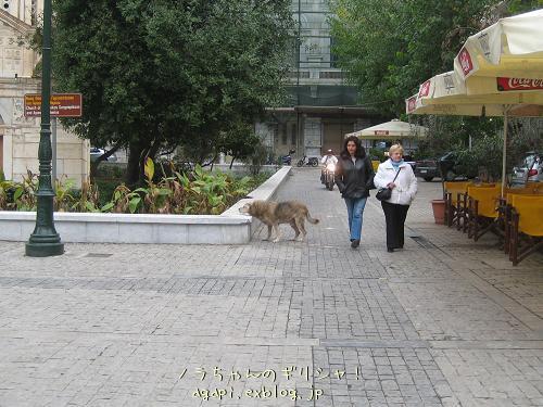 坊さん嫌いの野良犬君_f0037264_9351052.jpg