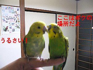 f0196665_044213.jpg