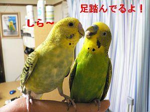 f0196665_05372.jpg
