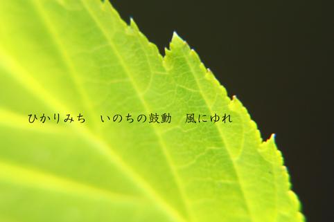 b0146278_5535961.jpg