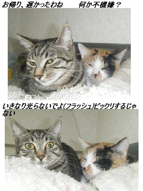 b0112380_1947064.jpg