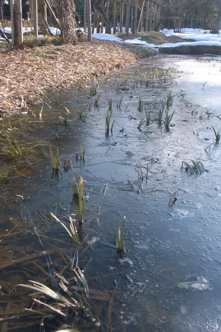 氷の池@御薬園。_c0141989_2104586.jpg