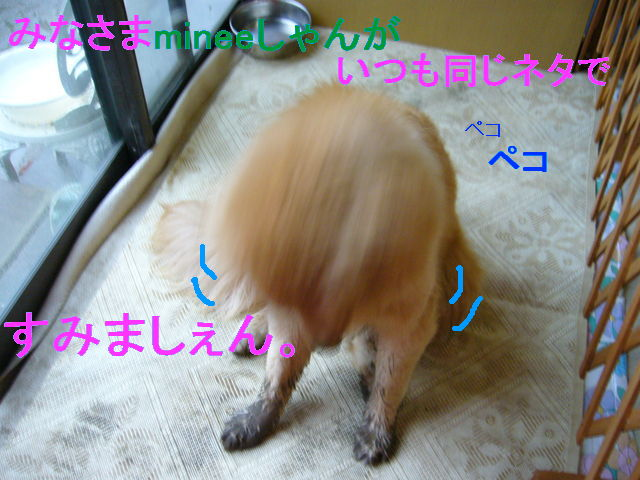 e0161194_1712581.jpg