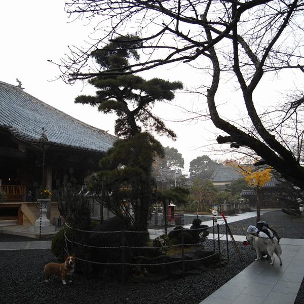12月10日 おへんろ30日め♪ by GX100_c0049299_826398.jpg