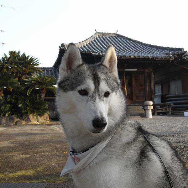 12月10日 おへんろ30日め♪ by GX100_c0049299_8271181.jpg