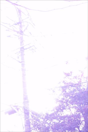 b0139407_2051215.jpg
