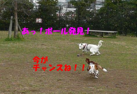 f0121712_1045998.jpg