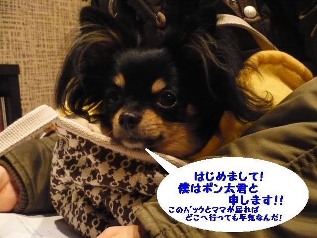 じ~~~~~~。。。。&犬濯屋レシピ!_b0130018_10423242.jpg