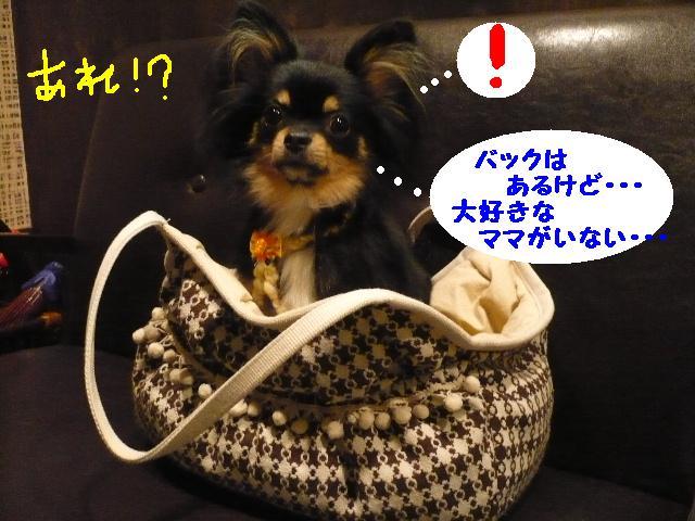 じ~~~~~~。。。。&犬濯屋レシピ!_b0130018_104551100.jpg