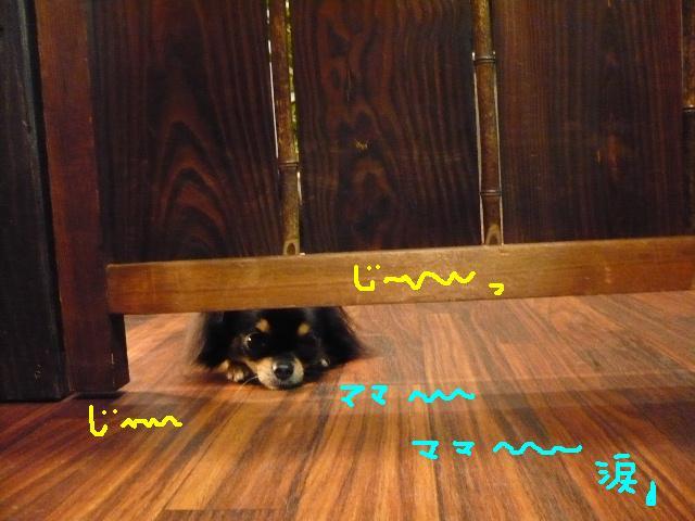 じ~~~~~~。。。。&犬濯屋レシピ!_b0130018_10465360.jpg