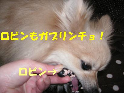 c0179136_2231993.jpg