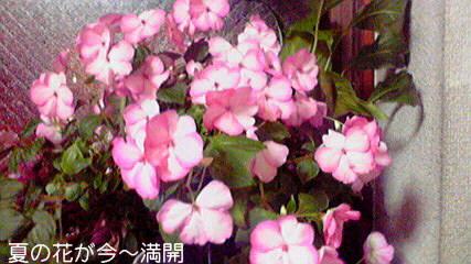 d0051146_19475631.jpg