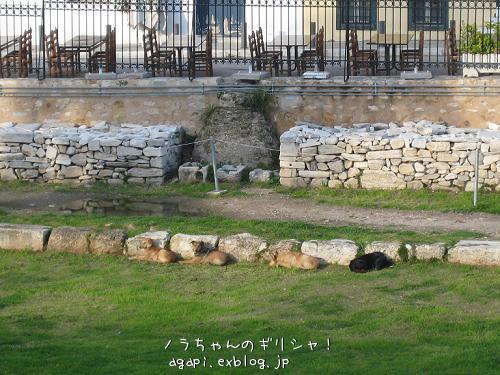 ローマ時代のアゴラの番犬たちは家族_f0037264_10142921.jpg