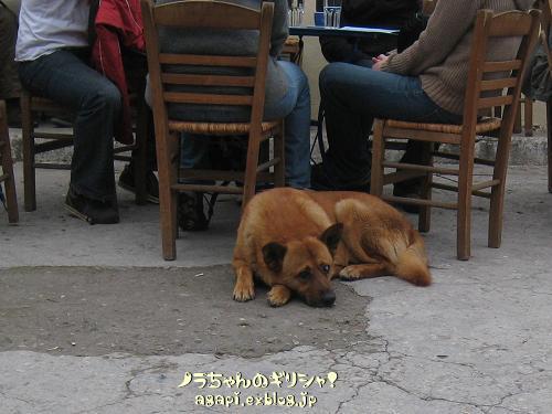 喫茶店の外席にいたオデュセア_f0037264_20565963.jpg