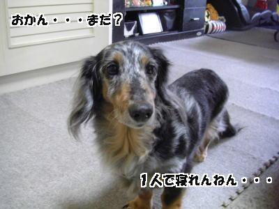 d0020869_16434712.jpg