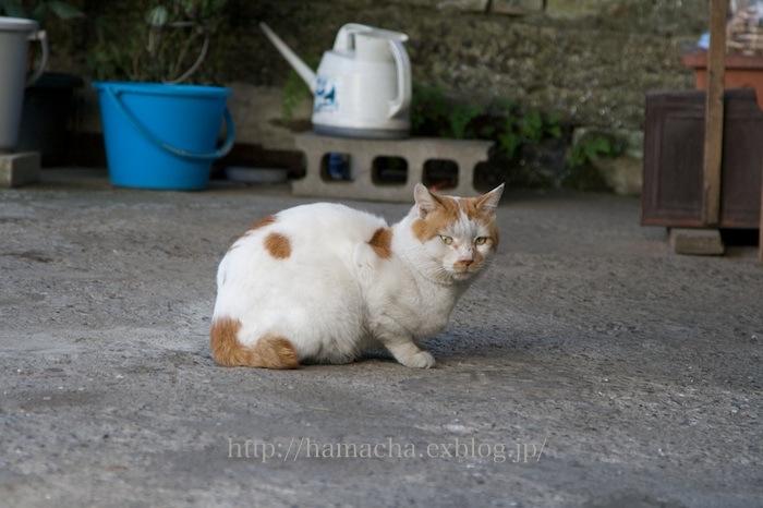 Cats in Motomachi Town #2_c0158775_22135323.jpg