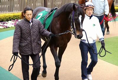 東京新聞杯は、名牝系出身・アブソリュートが初重賞制覇_b0015386_1984539.jpg