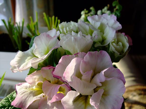 雄とのお別れと春を感じる花たち_e0012815_21474262.jpg