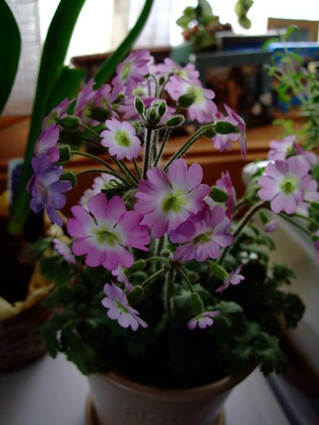 雄とのお別れと春を感じる花たち_e0012815_21475840.jpg