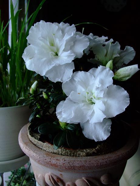 雄とのお別れと春を感じる花たち_e0012815_21532645.jpg