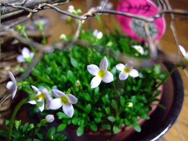雄とのお別れと春を感じる花たち_e0012815_21535534.jpg