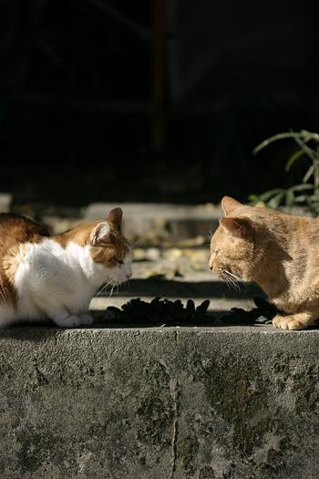 [猫的]お見合い_e0090124_8291841.jpg