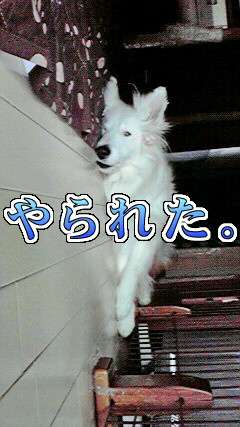 c0078428_190381.jpg