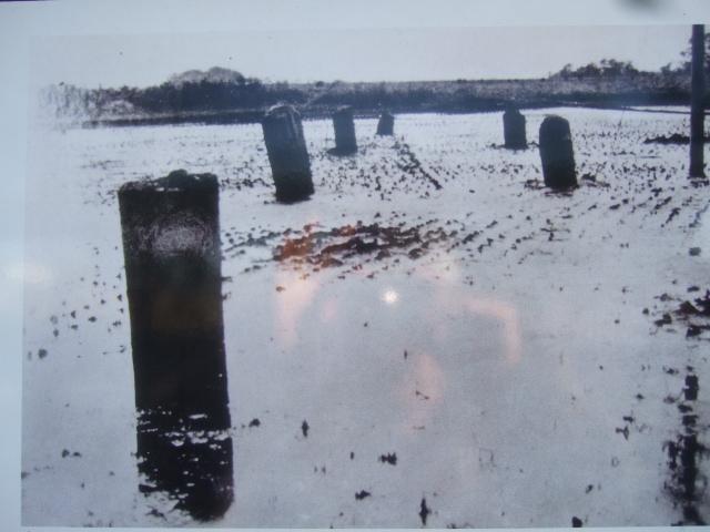 3本足のダイコン....相模川の橋脚....._b0137932_10304062.jpg