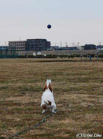 ボール遊び大好き_c0099133_1181412.jpg